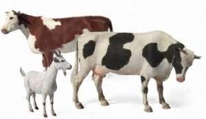 MB 3566 Zwierzęta domowe